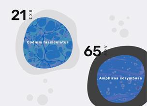 Органические формы, анимированные с SVG